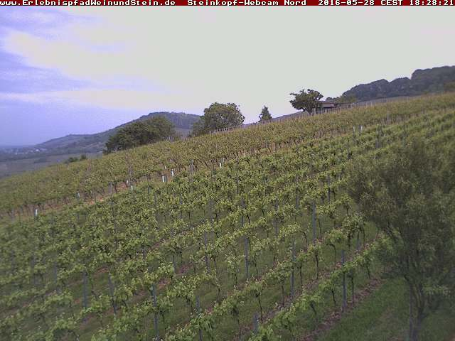 Heppenheim Steinkopf Vineyard (North)